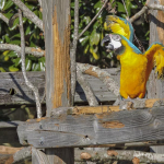 Exotic Birds at Zoo World - Panama City Beach